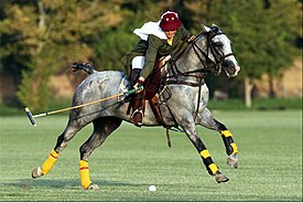 Iranian girl polo player.jpg