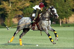 English: Iranian girl polo player. فارسی: یک د...