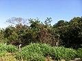 Itupeva - SP - panoramio (1081).jpg