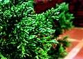 JNU Rain over green leaves.jpg