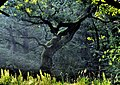 Jabłonna - Buchnik - panoramio (2).jpg