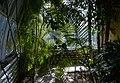 Jardí botànic de València, interior de l'hivernacle de la bassa.JPG