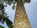Jardim Botânico do Bom Sucesso - panoramio.jpg