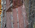 Jaspilite banded iron formation (Soudan Iron-Formation, Neoarchean, ~2.69 Ga; Rt. 169 roadcut between Soudan & Robinson, Minnesota, USA) 13 (19034464602).jpg