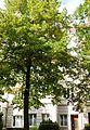 Köln Blumenthalstr. 15.jpg