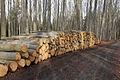 Křivoklátsko - Těžba dřeva II..jpg