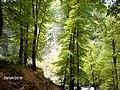 KAYIN AĞAÇLARI SUUÇTU ŞELALESİ - panoramio.jpg