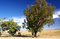 KCL CAMPGROUND (10-11-2005) Carrizo Plain National Monument, SLO Co, CA (1226282292).jpg