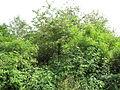 Kašparův vrch, vršky stromů a keřů.jpg