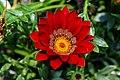 Kalimpong Flora and Fauna10.jpg