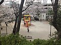 Kamezuka Koen cherry blossoms over playground.jpg