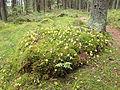 Kangasvuori nature trail 4.jpg