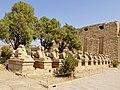 Karnak Tempel Dromos 33.jpg