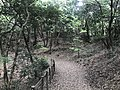 Kasuya Research Forest of Kyushu University 4.jpg