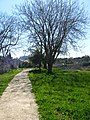 Kerameikos, Ancient Graveyard, Athens, Greece (4451569755).jpg