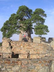 Large tree growing out of the castle wall