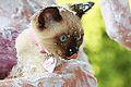 Kimono Kitty Day TwentyTwo (22-365) (3712914007).jpg