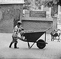 Kinderen brengen vakantie door in stad. Helpen in Artis, Bestanddeelnr 912-7946.jpg