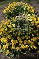 Kirovohrad Arboretum for WLE 2016 03 (YDS 4203).jpg