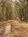 Koenigswald - Waldweg (Woodland Path) - geo.hlipp.de - 34716.jpg