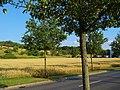 Kohlberg (Hill), Pirna 121604155.jpg