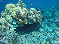 Korallenriff Malediven (29325278860).jpg