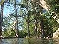 Krause Springs - Ropeswing - panoramio.jpg