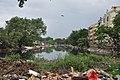 Krishnapur Canal - Dum Dum - Kolkata 2017-08-08 4035.JPG
