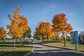 L'automne au Vieux-Port de Montréal (15462980632).jpg