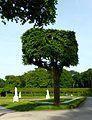 LSG Brühler Schlossgarten 09.jpg