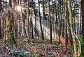 LSG Waldgebiet Reichswald, Kranenburg - Inspiration II (8397136345).jpg