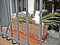 La Pieta'-01,02,2012-vaso...gelato.jpg