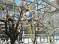 La cage des perroquets (2363310539).jpg