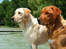 Two dogs near the water