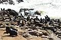 Lachtani na mysu Cape Cross - Namibie - panoramio (2).jpg