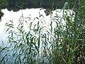 Lake - panoramio - Pavlik Ch.jpg