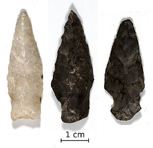 "Lamoka projectile point - Lamoka projectile points from central New York State. The point on the left is a ""stemmed"" lamoka point made of quartz. The middle one is a ""stemmed"" lamoka point made of flint and, the point on the right is a flint ""side notched"" lamoka point."