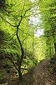 Landschaftsschutzgebiet Nagoldtal (8 Teilgebiete), Kennung 2.35.037, Lützengraben, Wildberg 02.jpg