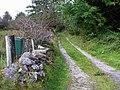 Lane, Cashelaveela - geograph.org.uk - 1494860.jpg