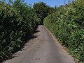 Laneside vegetation - geograph.org.uk - 895428.jpg