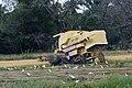 Langkawi Malaysia Rice-Harvesting-02.jpg