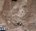 Lapa do Santo - Sepultamento 15 - Foto de Campo da Exposição 12.jpg