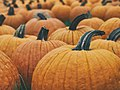 Large pumpkins in field (Unsplash).jpg