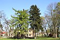 Larix, Picea and Fraxinus Marki.jpg