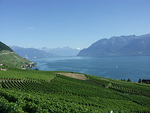 Genfersee und Weinanbaugebiet Lavaux