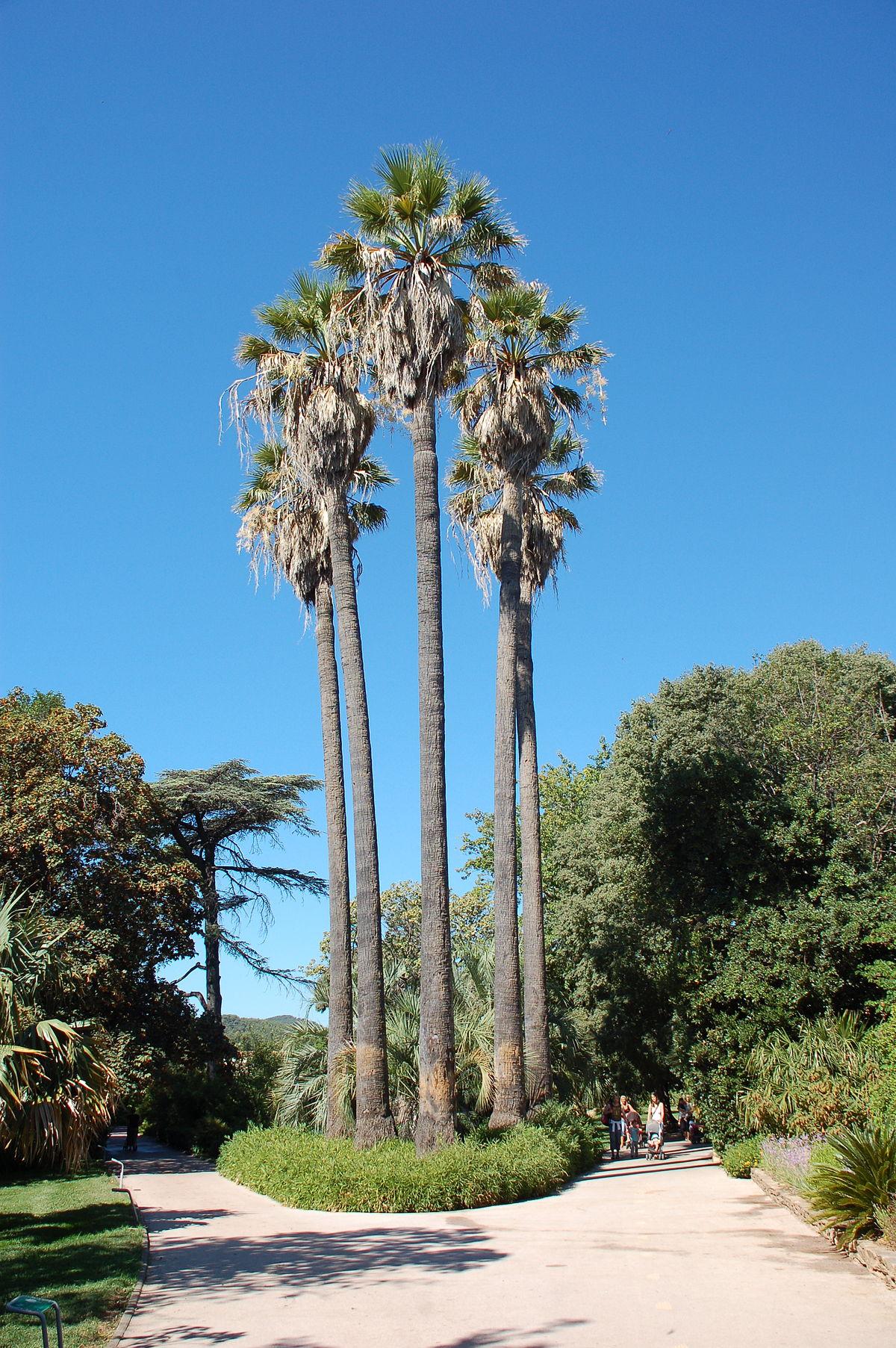 Parque olbius riquier wikipedia la enciclopedia libre for Jardin olbius riquier