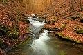 Leafy Hollow (8311286679).jpg