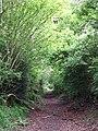 Leafy lane - geograph.org.uk - 434724.jpg