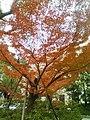 Leaves turn red - panoramio.jpg