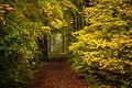 Leitersweiler Herbstwald 2.jpg